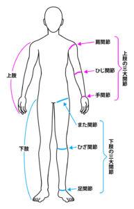 身体部位の名称
